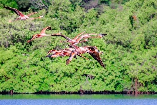 lago guaranoca Cuba